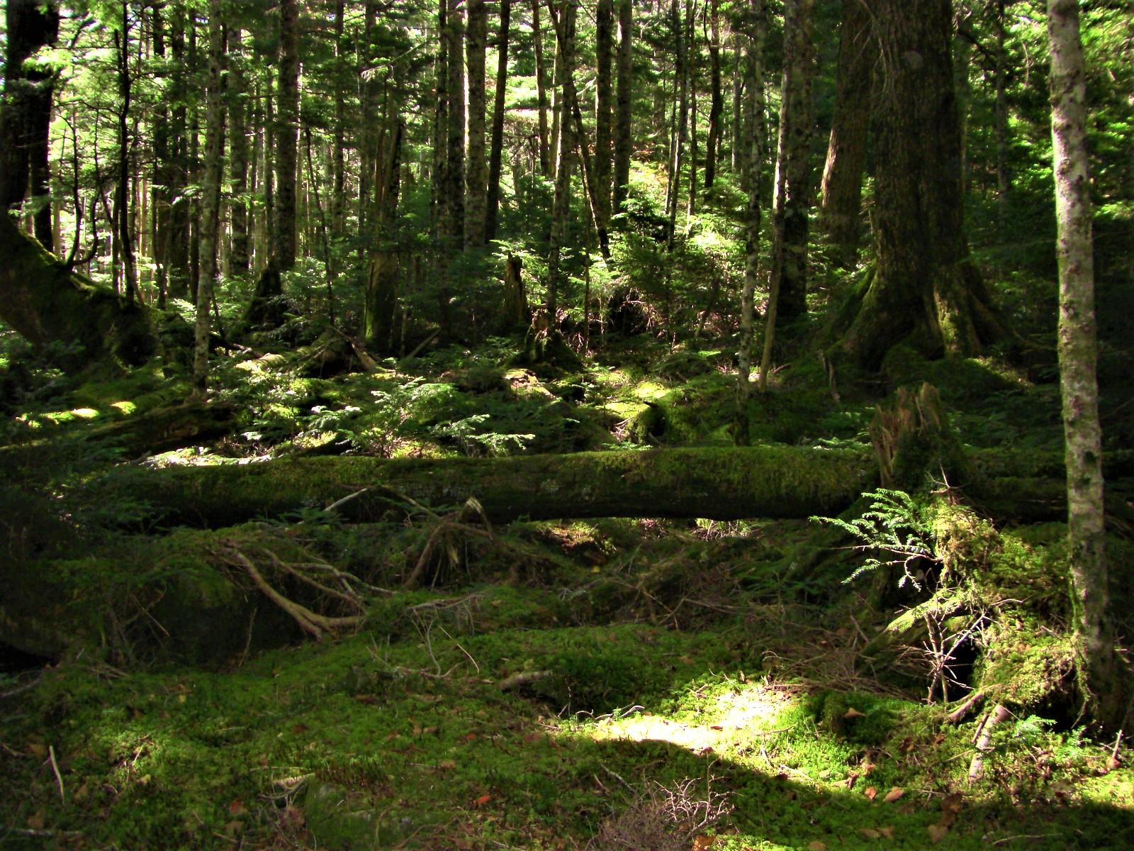7)湯川の森ー精霊のウィンクー